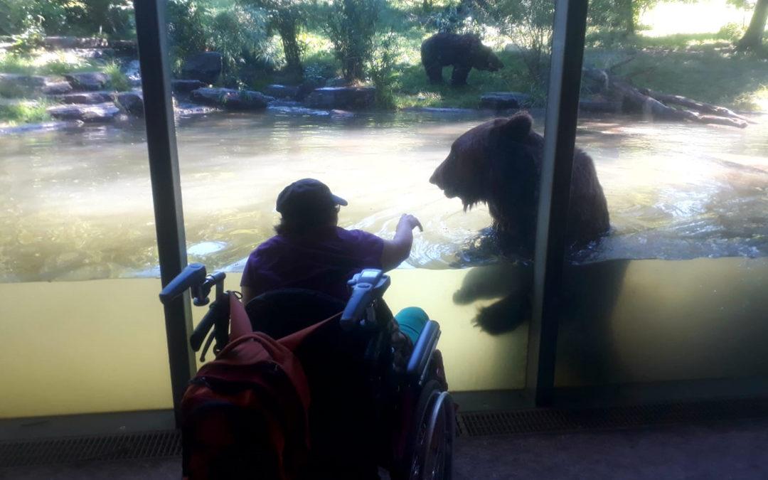 Atelierausflug ins Dählhölzli – Barrierefrei hautnah an den Bären!
